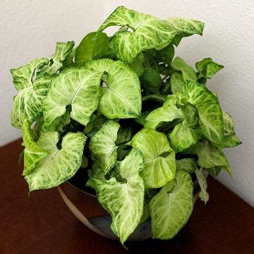 20 most common house plants 20 easy houseplants you ll midwest living