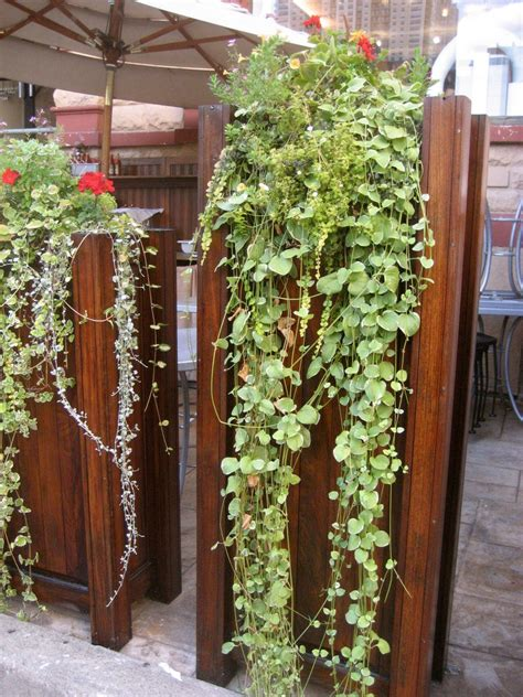 Vertical Vegetable Gardening Ideas Vertical Wall Garden Hanging Wall Garden Design