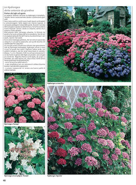 piante e arbusti da giardino arbusti piante da giardino con piante acidofile e azalee