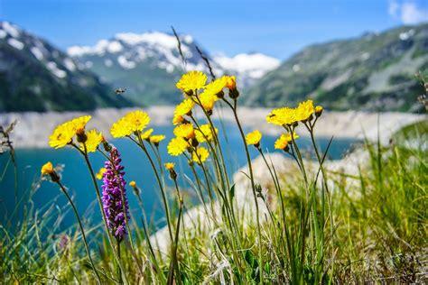 immagini di fiori gialli foto gratis fiori natura giallo fiori gialli