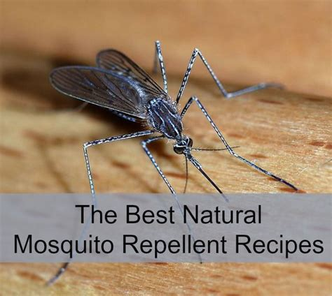 the best natural mosquito repellent recipes