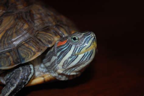favorite foods   turtles   eat find