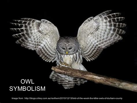Owl Symbolism Owl Meanings