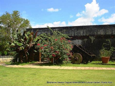 Caguas Botanical Garden 24 Best Images About Caribbean Botanical Gardens On Pinterest Ocho Rios Gardens And Cayman