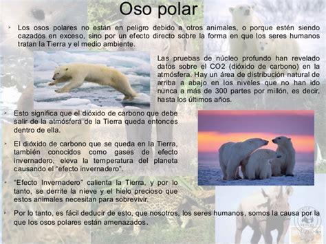 libro oso polar oso polar animales en peligro de extinci 243 n