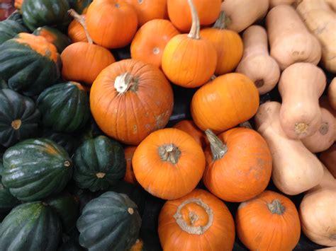 photos pumpkins file pumpkins and squash display jpg wikimedia commons