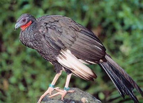 imagenes de animales endemicos aprendiendo a conocer la biodiversidad