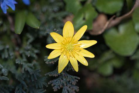 Daun Semi gambar alam mekar menanam daun bunga musim semi