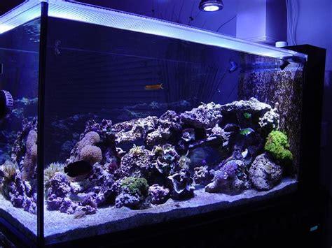 illuminazione led per acquario illuminazione a led per acquari led acquario led