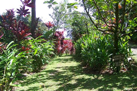 maui garden  eden arboretum