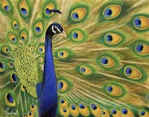 showoff peacock painting painting by prashant shah