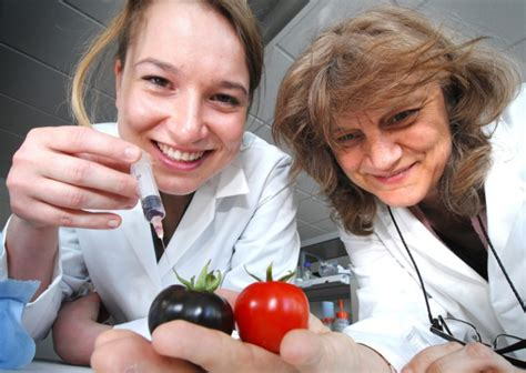 Cathie Marthin purple gmo tomatoes are growing medicines in the uk