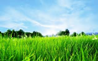 Green Grass Landscaping by 5 Tricks For Perfect Lawn Aeration Lawn Aerating In