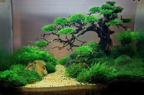 Aquascaping With Driftwood by This Aquascape Aquariums