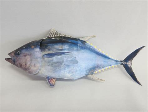 Fish Papercraft - pacific bluefin tuna fish free paper model papermodels