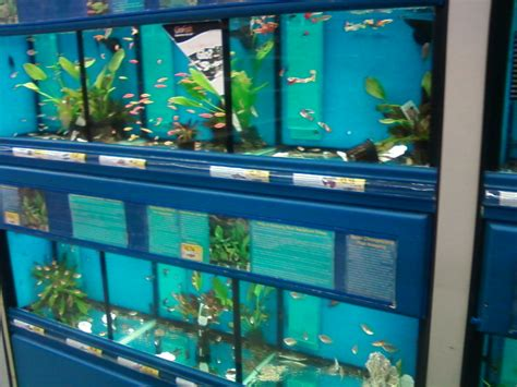 pet section pet fish at walmart top 188 complaints and reviews about