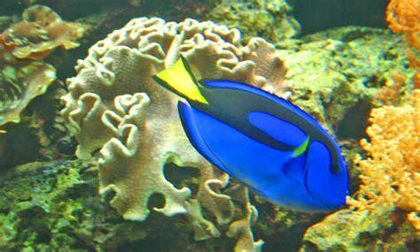 types of aquarium fish tropical fish types fish breeds for your aquarium adds