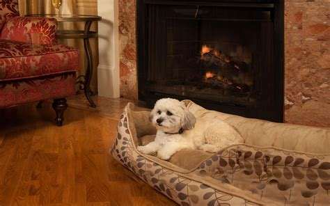 friendly hotels california best pet friendly hotels in monterey ca newatvs info
