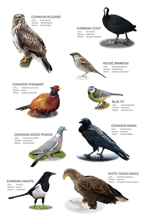 different kinds of birds and their names www pixshark