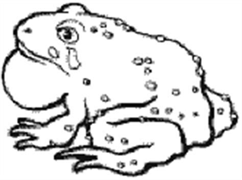 bullfrog coloring pages