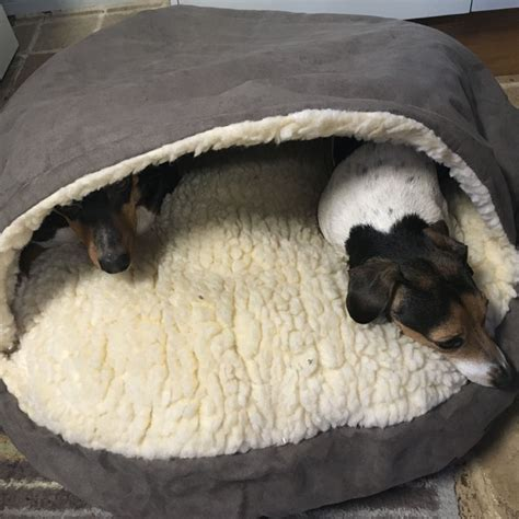 troline beds to sleep on dog cave bed picture of cave bed grey extra large