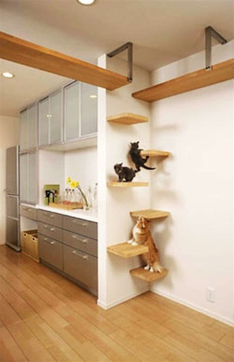 cat house japan s perfect cat house