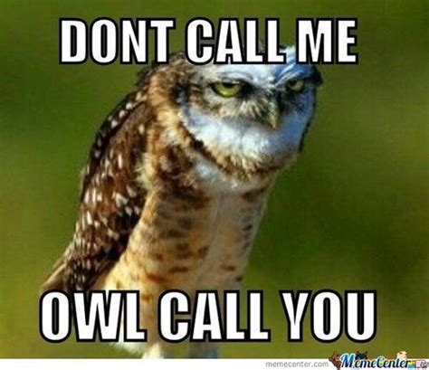 Funny Owl Memes - the adventures of owl girl