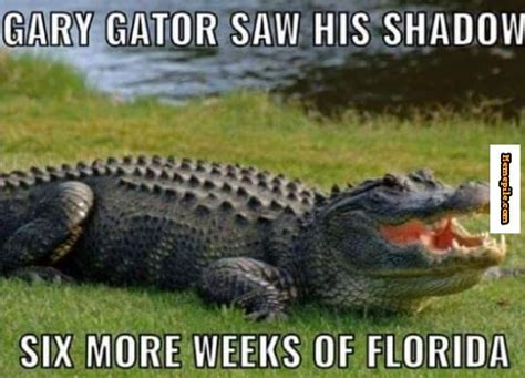 Florida Gator Memes - gary gator saw his shadow six more weeks of florida meme