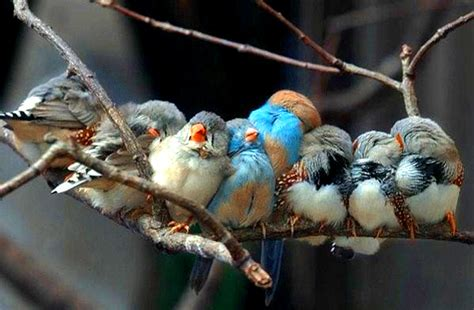 great pictures of birds