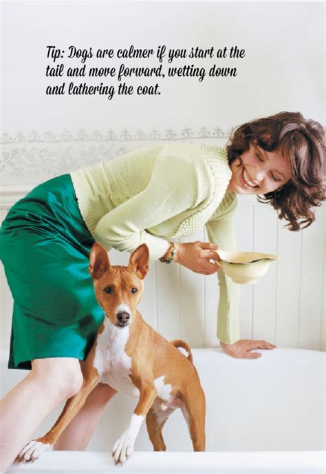 how to bathe puppy how to properly bathe your modern magazine