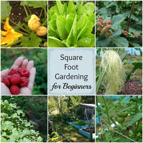 square foot garden layout best 25 square foot gardening ideas on square
