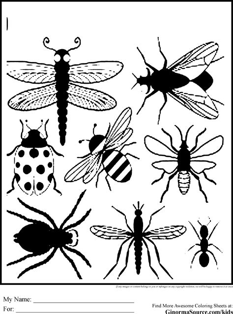 printable pictures insects bug coloring pages to print printables pinterest