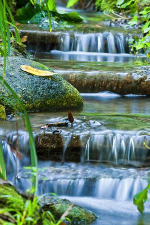 Bachlauf Richtig Bepflanzen by Bachlauf Anlegen Pflanzen Und Gestaltung Mit Und Ohne Teich