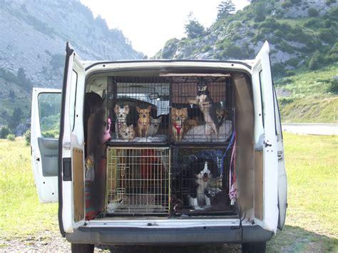 puppy transport service pet taxi interpaws pet couriers pet transport europe spain pet taxi spain to uk