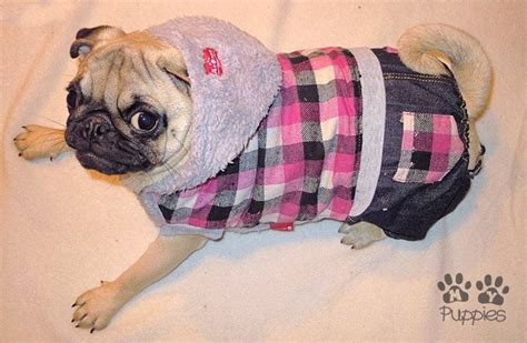 pattern for pug clothes 35 best pugs in clothes images on pinterest pug dogs