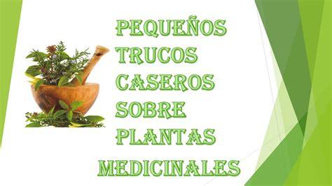 plantas medicinales remedios caseros medicina natural plantas medicinales remedios naturales youtube