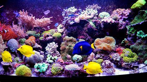 meerwasseraquarium beleuchtung ableger meerwasser led beleuchtung nano aquarium