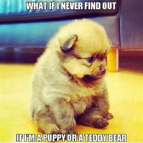Meme Cute - top 79 funny and cute puppies memes funny dog dompict com