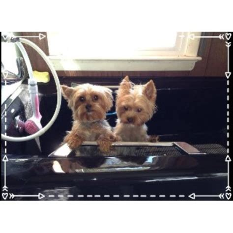 Vanity Furr Grooming by Vanity Fur Pet Grooming Salon In Laurel Delaware Id 138173