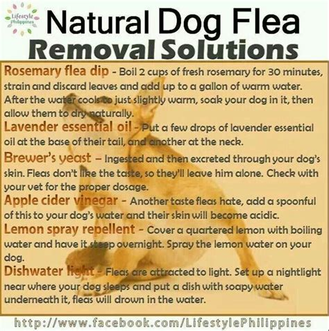 flea remedies dogs health beds bowls and more