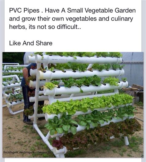 Pvc Pipe Vegetable Garden Trusper Pvc Pipe Vegetable Garden