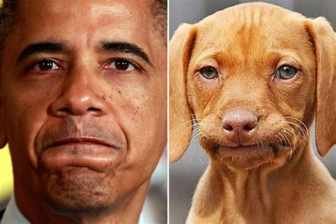 Frowning Dog Meme - celebrities and their dog look alikes