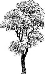 How To Draw A Tree Psikotes Vector Gratis 193 Rbol Blanco Y Negro Ramas Negro