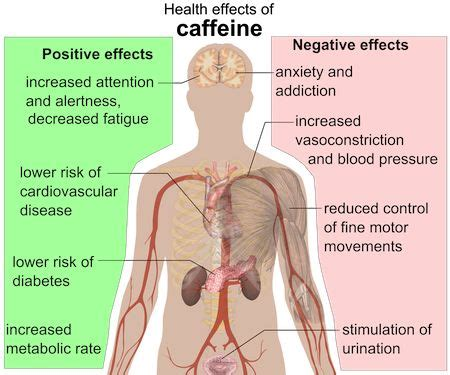 Coffee (caffeine) and its Effects in the Human Body