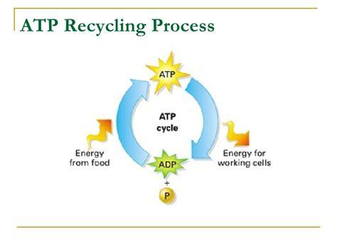 Adp Background Check Process Chap 7 Concept Checks