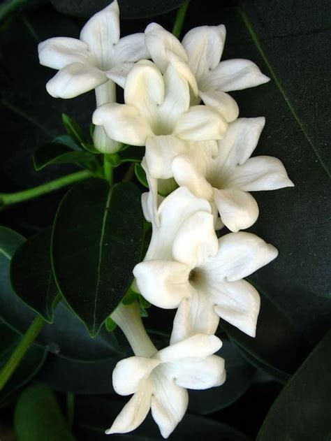 fragrant flowers   world