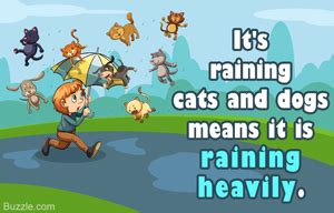 raining cats and dogs origin true meaning and origin of the idiom it s raining cats and dogs