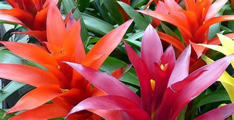 coltivare fiori piante e fiori da giardino tipologie e consigli di