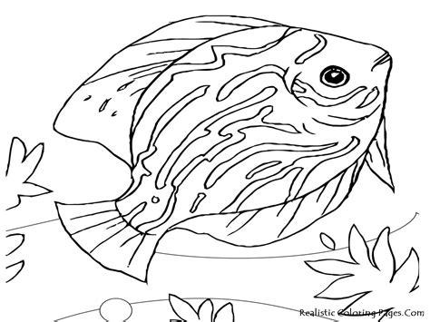 ocean coloring page education com ocean animals coloring pages sea life coloring pages