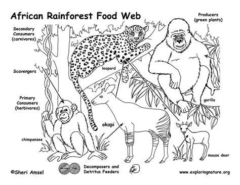 coloring pages of food webs 9 best images of food web diagram worksheet food web